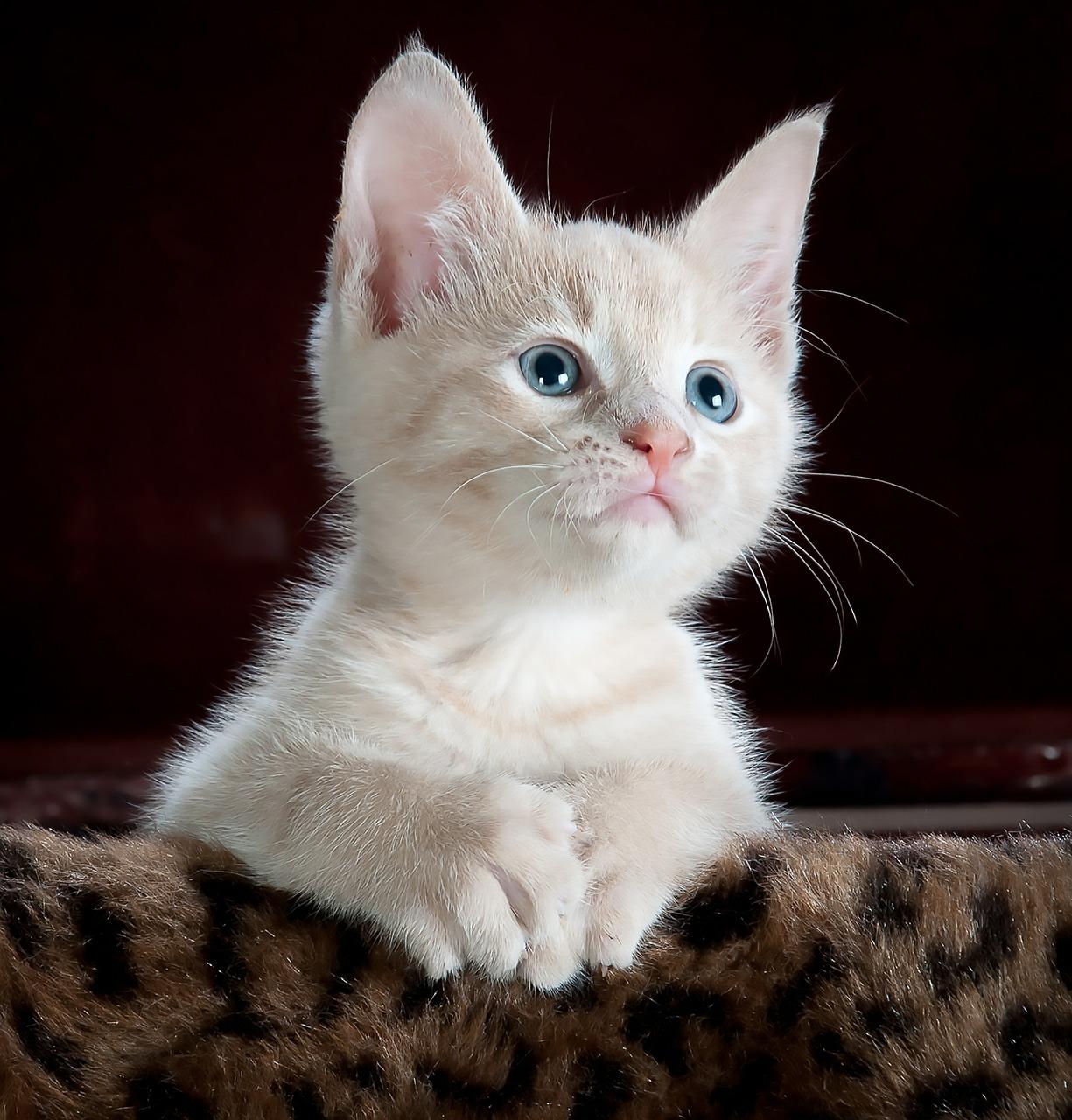 Czy warto mieć kota?